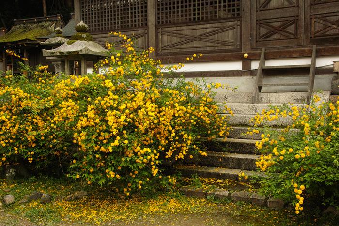 松尾大社                        _f0021869_22421368.jpg