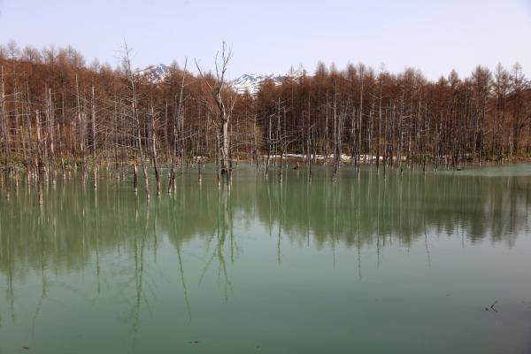 青い池・春_e0338273_18565158.jpg