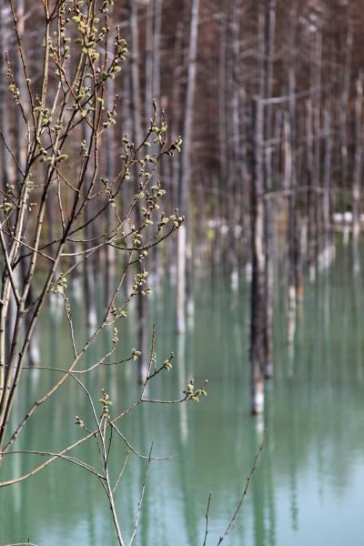 青い池・春_e0338273_18565227.jpg