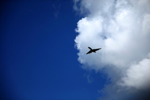 To the sky_e0338273_18580544.jpg