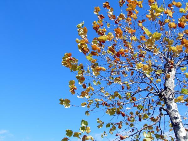 Last autumn_e0338273_18582508.jpg