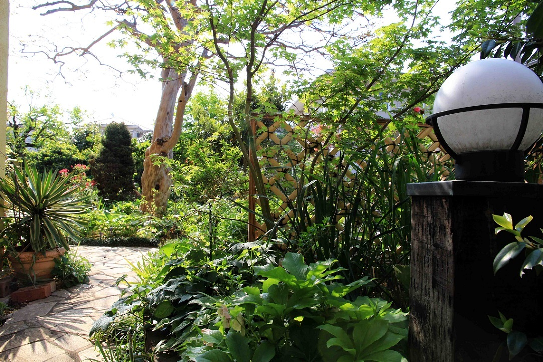 庭でひと眠り。。。(汗)_a0107574_18005149.jpg