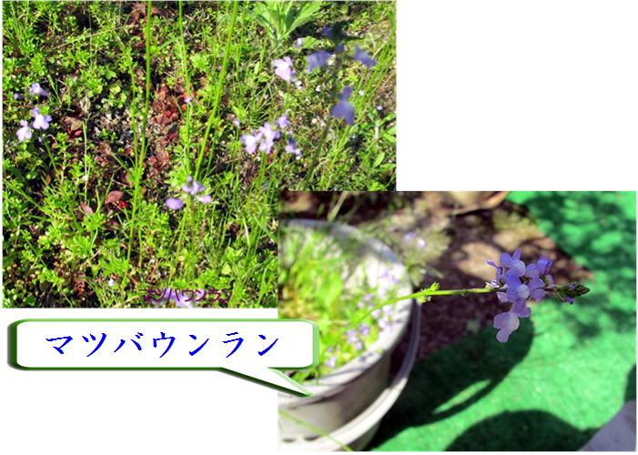 f0003174_1352182.jpg