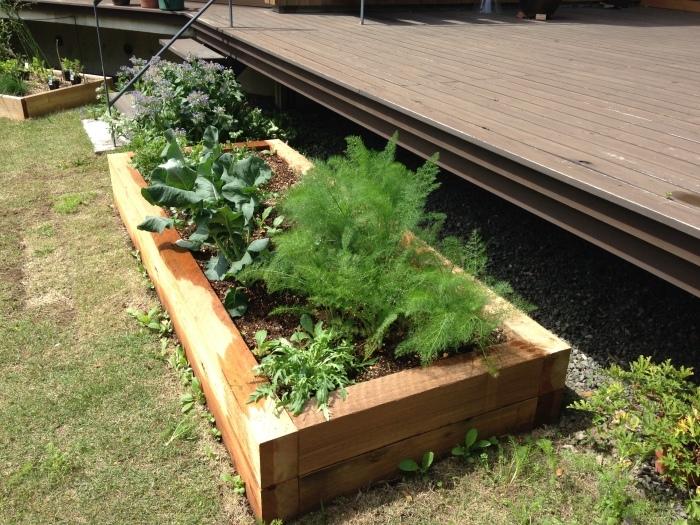 今年も菜園作っています♪_b0167282_22524990.jpg