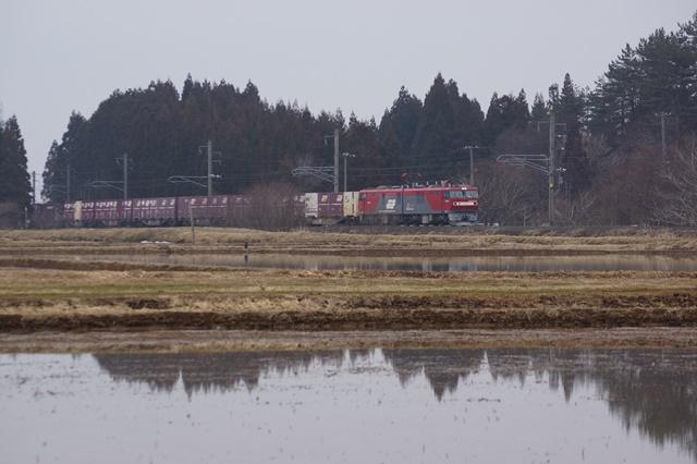 藤田八束の貨物列車写真集:春爛漫貨物列車が勢揃い、「桃太郎」「金太郎」「RED BEAR」_d0181492_17421276.jpg