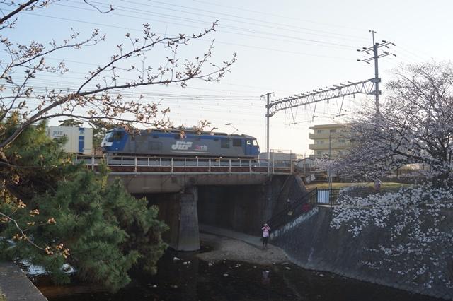 藤田八束の貨物列車写真集:春爛漫貨物列車が勢揃い、「桃太郎」「金太郎」「RED BEAR」_d0181492_17535151.jpg