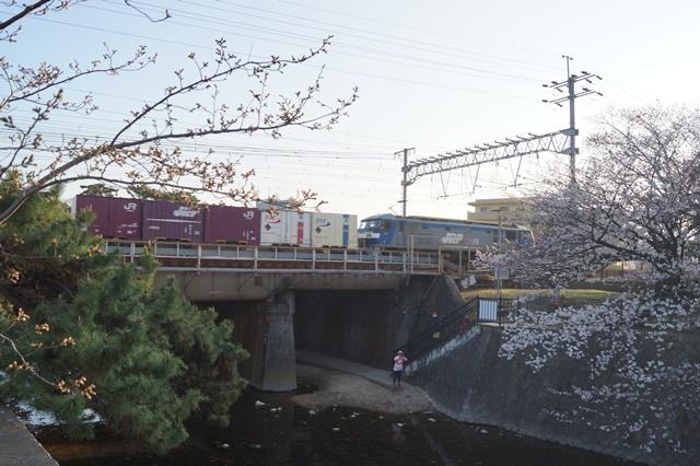 藤田八束の貨物列車写真集:春爛漫貨物列車が勢揃い、「桃太郎」「金太郎」「RED BEAR」_d0181492_17541679.jpg