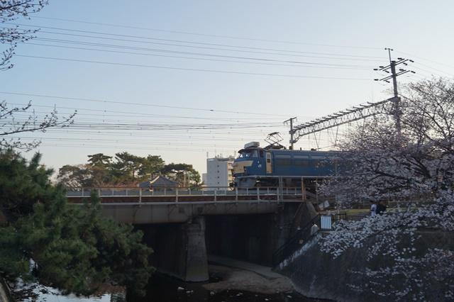 藤田八束の貨物列車写真集:春爛漫貨物列車が勢揃い、「桃太郎」「金太郎」「RED BEAR」_d0181492_17543112.jpg