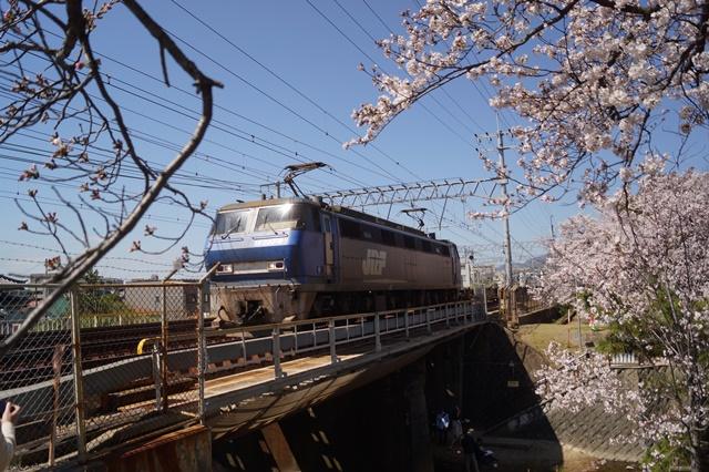 藤田八束の貨物列車写真集:春爛漫貨物列車が勢揃い、「桃太郎」「金太郎」「RED BEAR」_d0181492_17545486.jpg