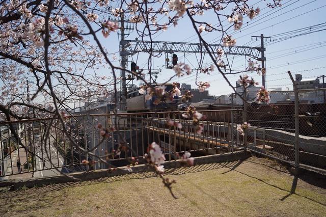 藤田八束の貨物列車写真集:春爛漫貨物列車が勢揃い、「桃太郎」「金太郎」「RED BEAR」_d0181492_17551246.jpg