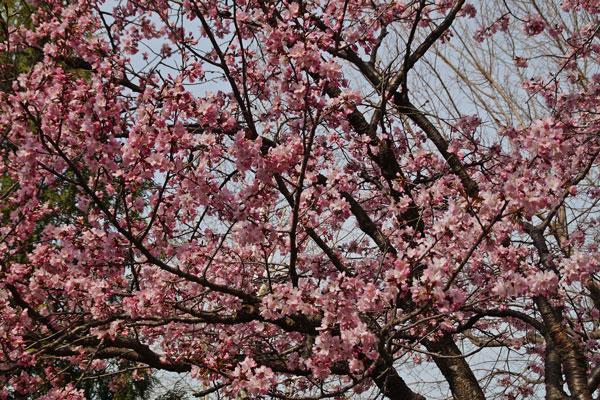 桜_d0162994_9285872.jpg