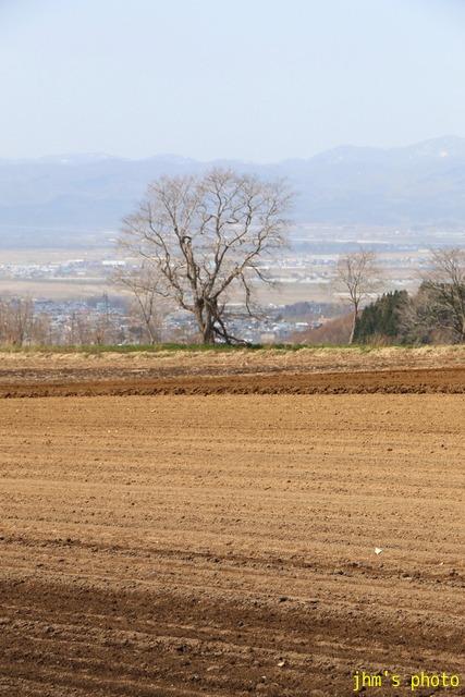 耕す~もどきが丘の春_a0158797_1311691.jpg