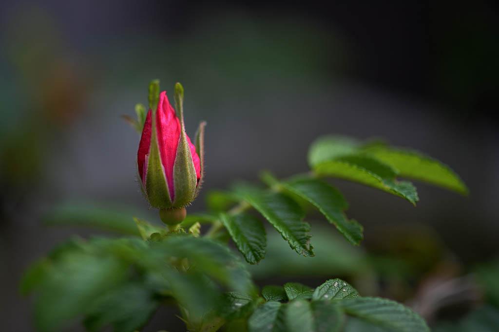 庭の花/ムナグロ/コチドリ/モズ/ドローン/太陽面_b0024798_9575455.jpg