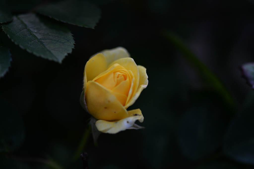 庭の花/ムナグロ/コチドリ/モズ/ドローン/太陽面_b0024798_9585645.jpg