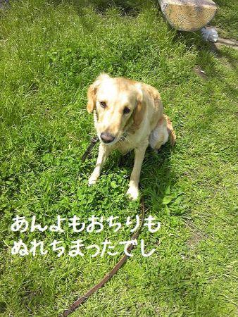 b0008217_19133648.jpg
