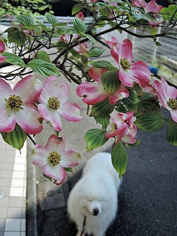 花ざかり_c0062832_6535334.jpg