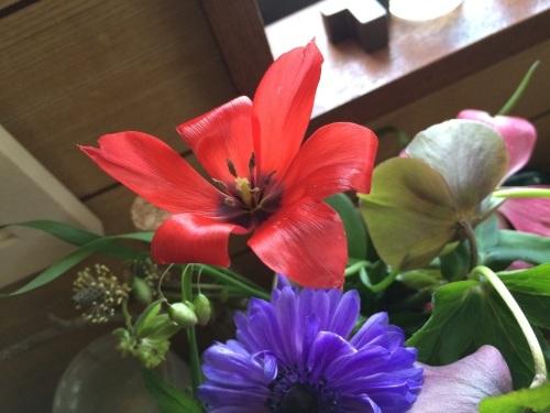 春花盛り_c0206645_18021509.jpg