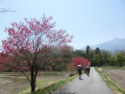 我が町シリーズ白州(横手) 花と緑の里山! _f0019247_2234359.jpg