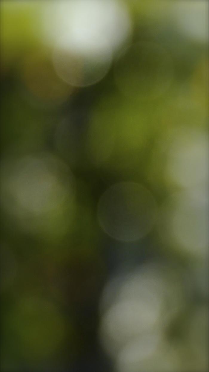 d0122350_831438.jpg