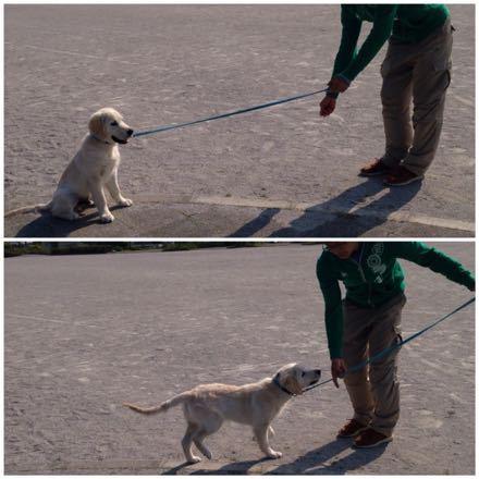 歩く練習をしなくっちゃ!_e0293553_18455172.jpg
