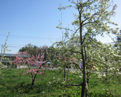 青空と新緑と花と_d0050155_9525950.jpg