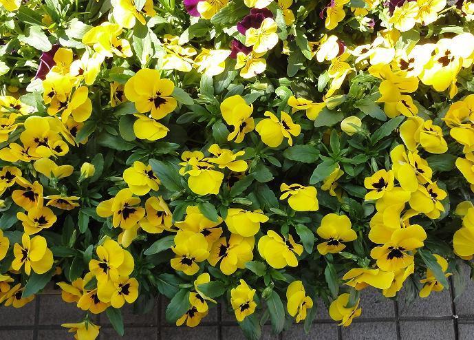 花壇におじさんが! _c0340785_09365726.jpg