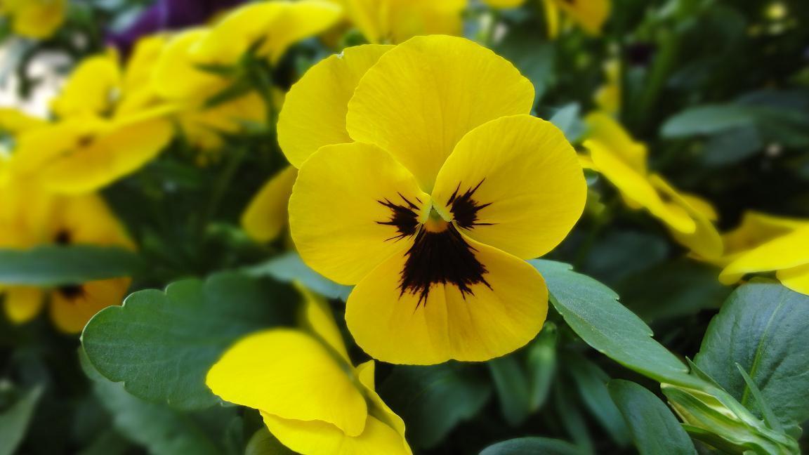 花壇におじさんが! _c0340785_09372354.jpg