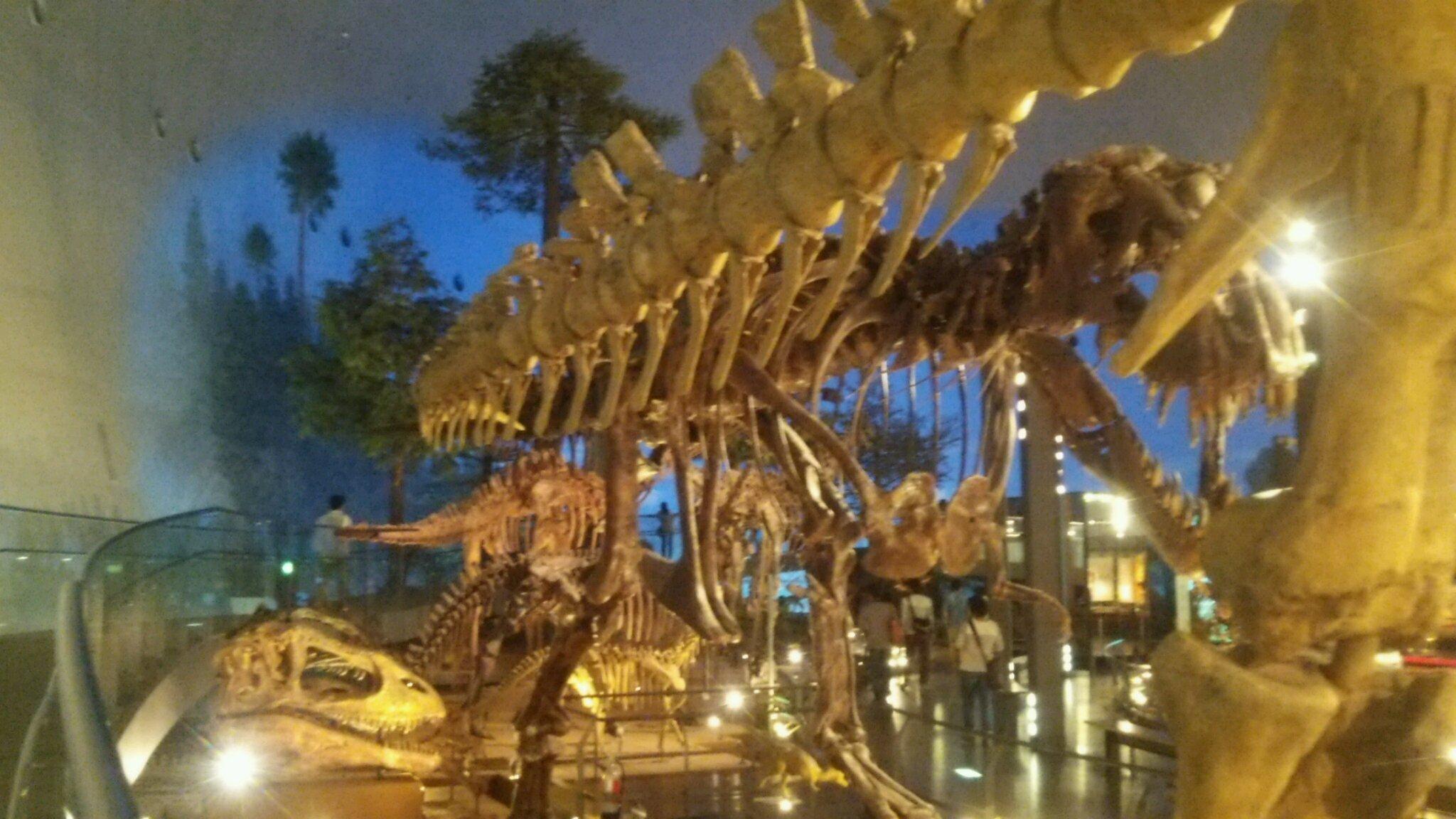 恐竜博物館へ行き、ビックリがいっぱい! 福井は最高!_e0119092_11104468.jpg
