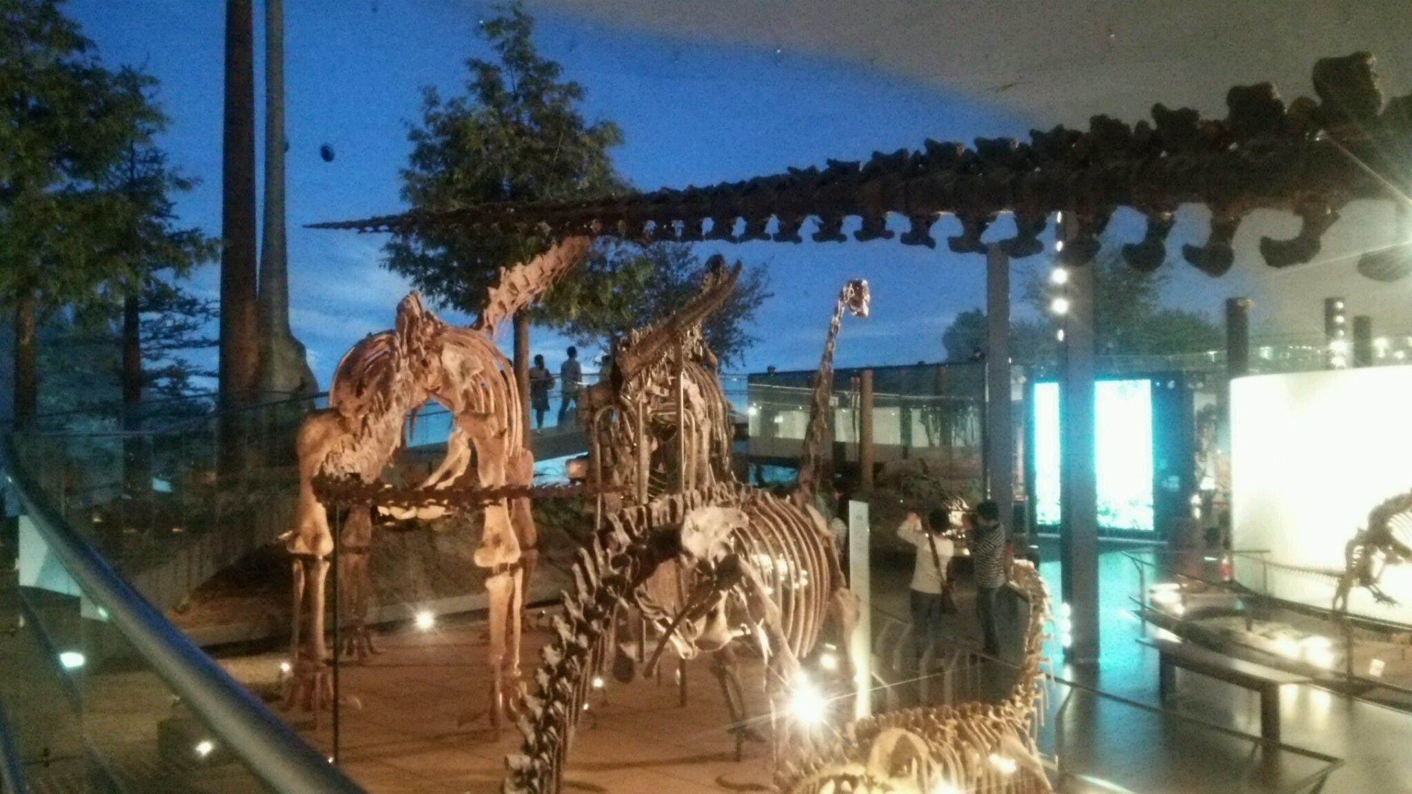 恐竜博物館へ行き、ビックリがいっぱい! 福井は最高!_e0119092_11111405.jpg