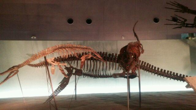恐竜博物館へ行き、ビックリがいっぱい! 福井は最高!_e0119092_11160226.jpg