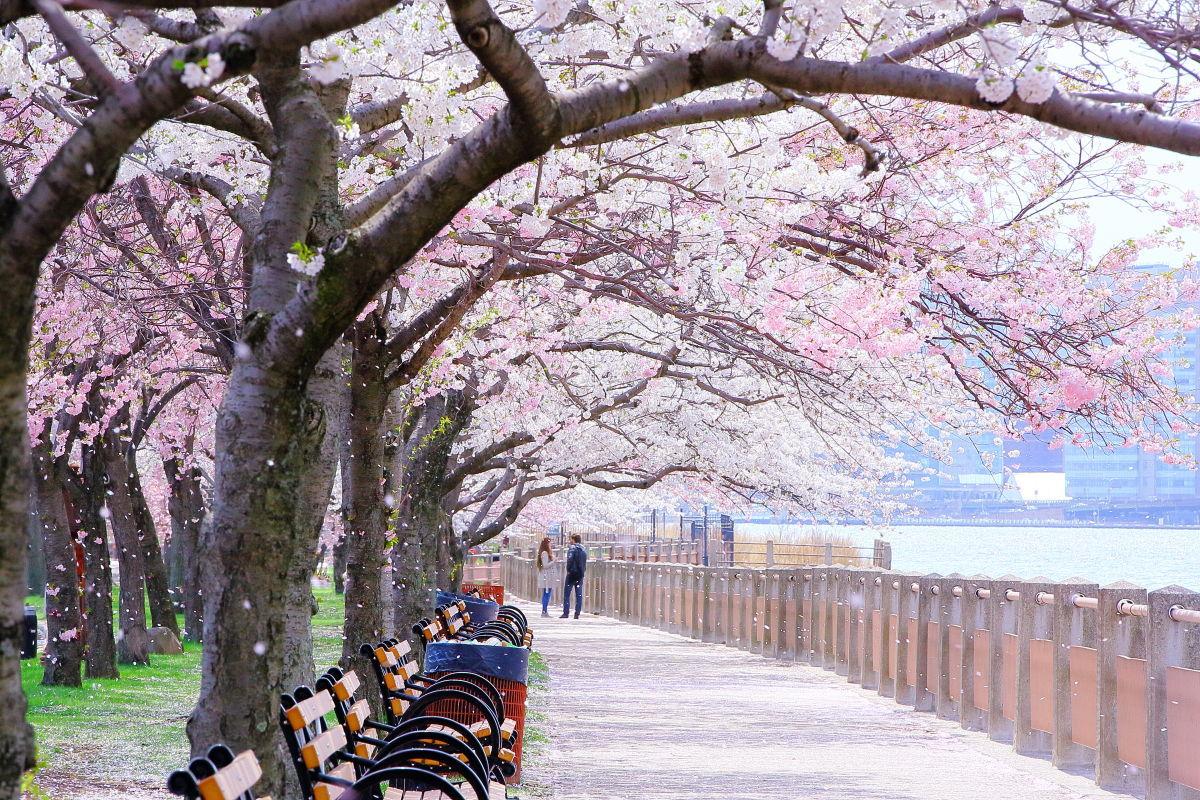 春なのに_a0274805_05361873.jpg