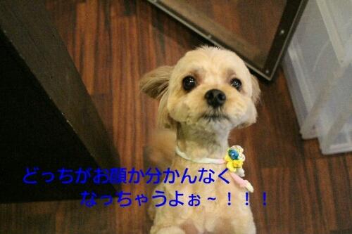 b0130018_0319100.jpg