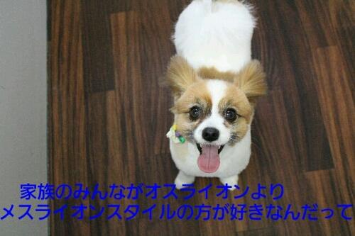 b0130018_038822.jpg