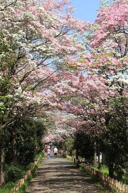 春 爛漫_d0150720_12304178.jpg