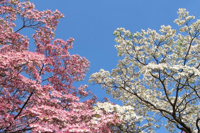 春 爛漫_d0150720_12344396.jpg