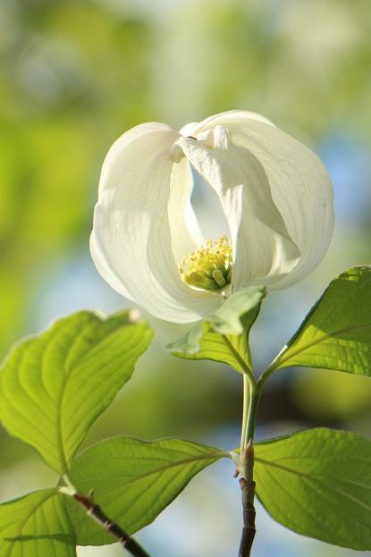 春 爛漫_d0150720_1236435.jpg