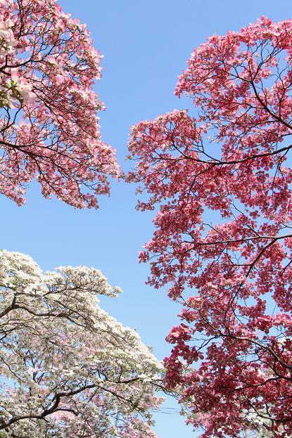 春 爛漫_d0150720_12505399.jpg