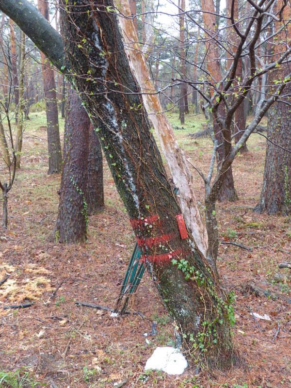 森の雨_a0288621_23493769.jpg
