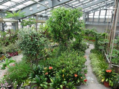 植物園^o^_f0170422_21335562.jpg