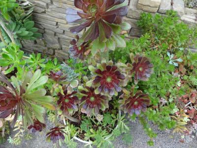 植物園^o^_f0170422_21335662.jpg