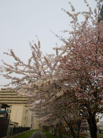 Blossom_e0026331_14362724.jpg
