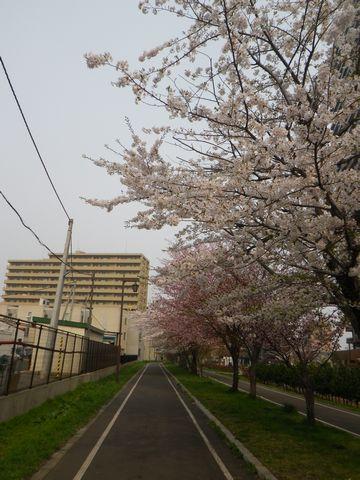 Blossom_e0026331_14363099.jpg