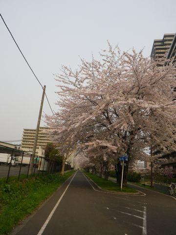 Blossom_e0026331_14363163.jpg