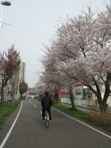Blossom_e0026331_14363362.jpg