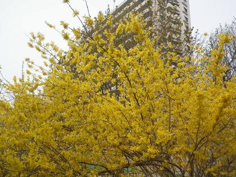 Blossom_e0026331_14363464.jpg