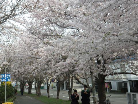 Blossom_e0026331_14363868.jpg