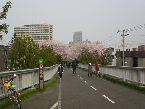 Blossom_e0026331_1436397.jpg