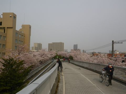 Blossom_e0026331_14364143.jpg