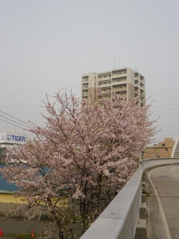 Blossom_e0026331_14364315.jpg