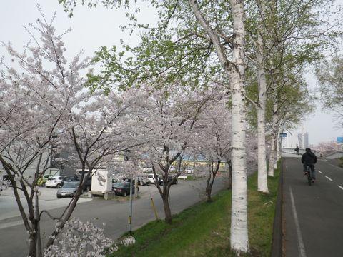 Blossom_e0026331_14364594.jpg
